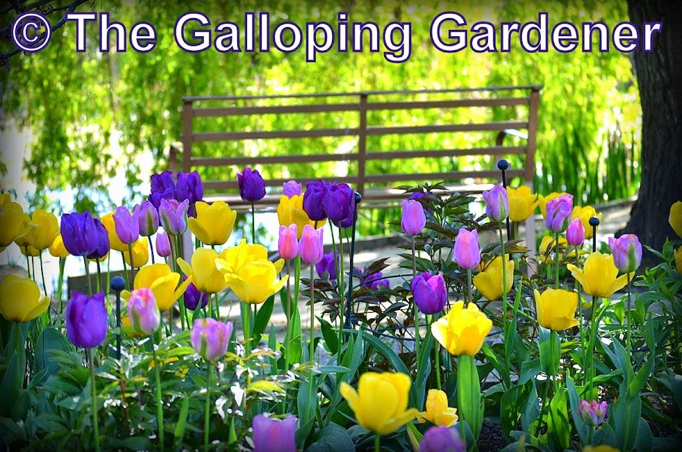 The Galloping Gardener