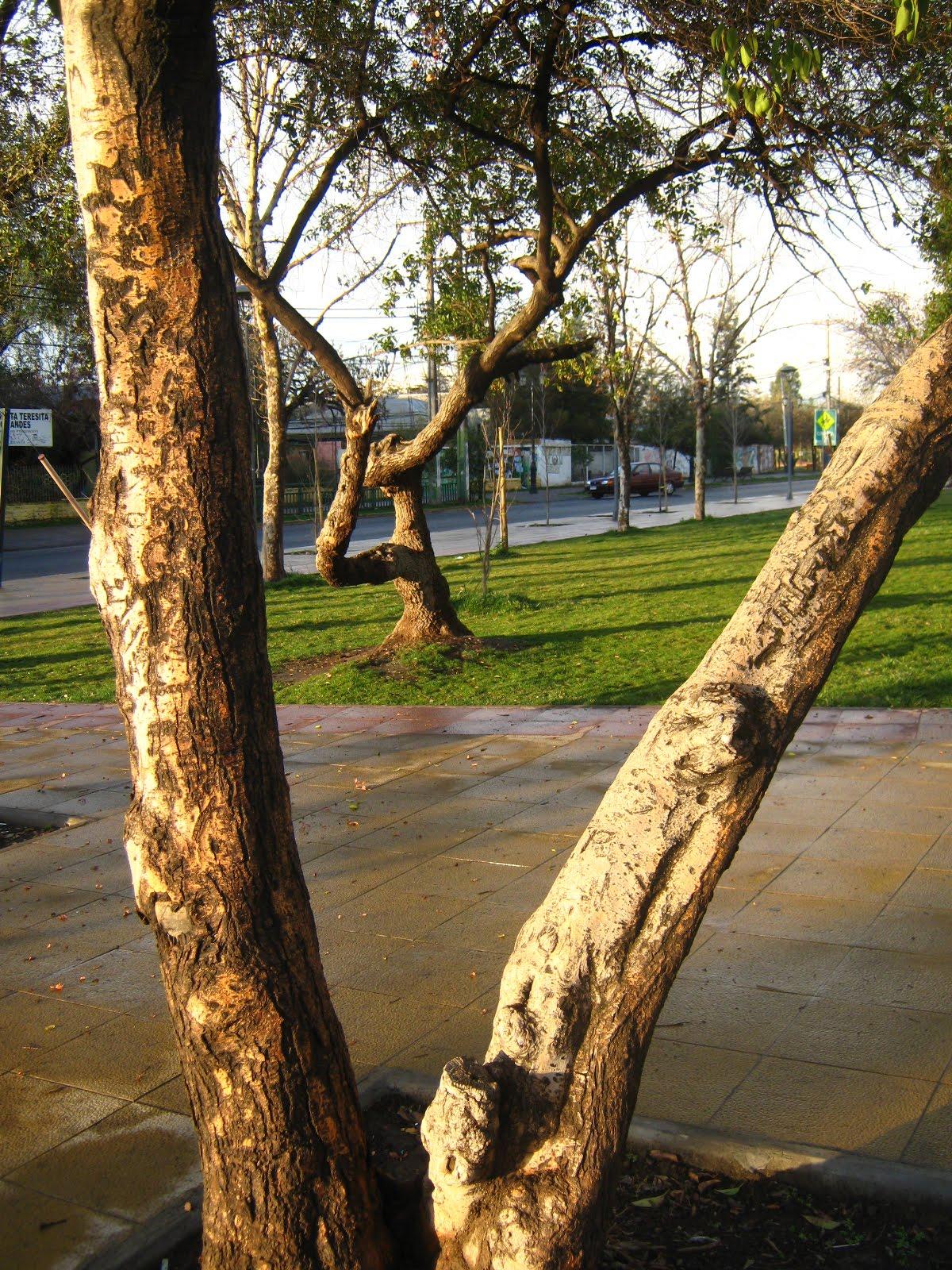 Plazas y parques de La Granja | Fotos IMG_9819