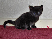 anubis my cat (kitten)