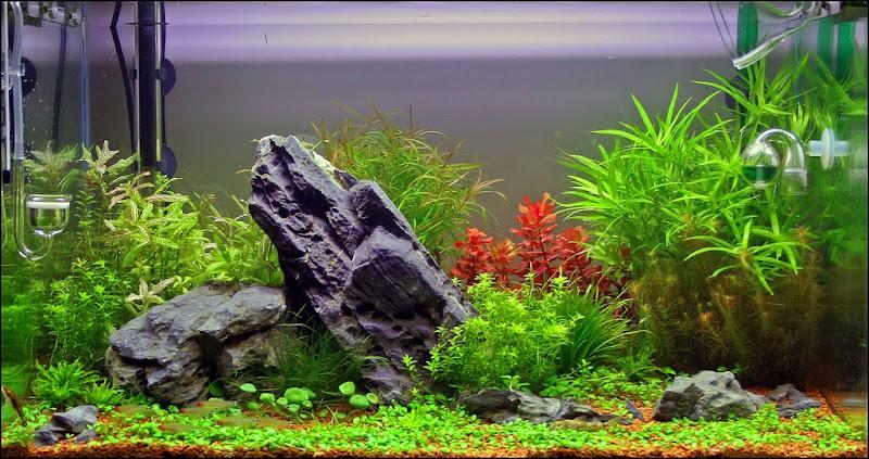 Aquarium Decorations Creating Homes For Fishes