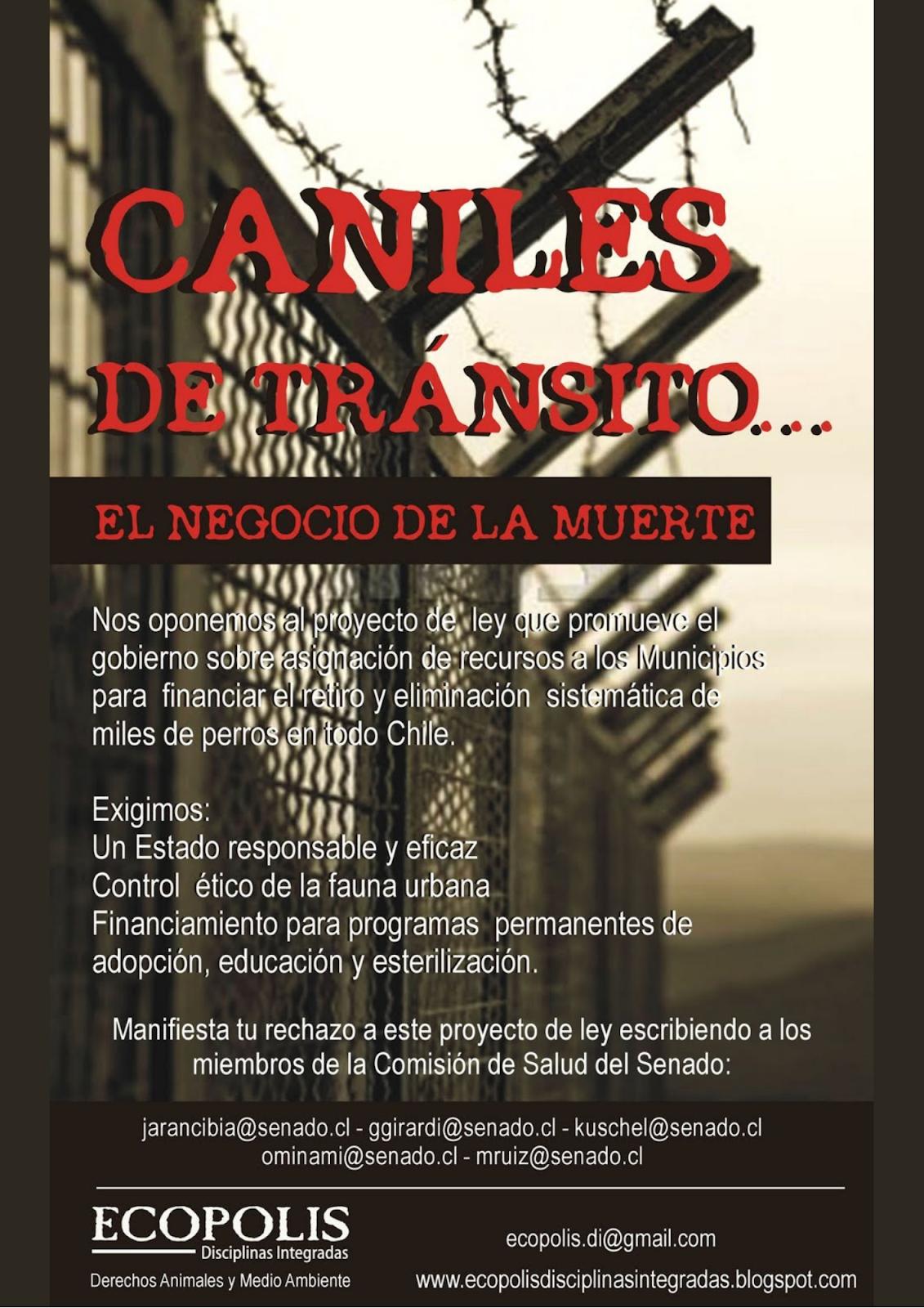 CANILES DE TRÁNSITO... EL NEGOCIO DE LA MUERTE