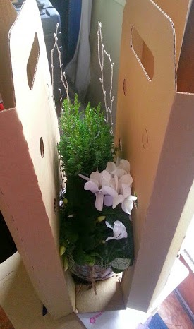 Bunches UK flower and plant delivery - cardboard packaging protecting the plant