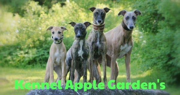 Kennel Apple Garden's