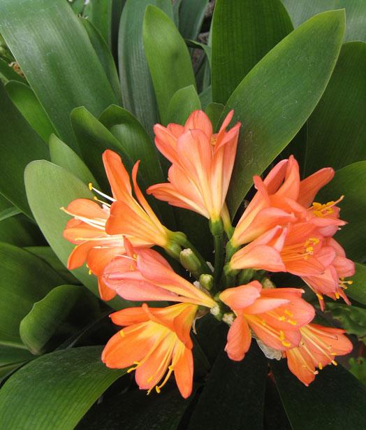 decora tu cuerpo Tipos de Flores Tropicales