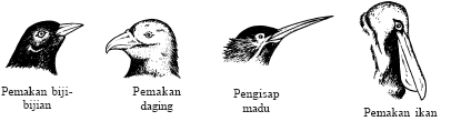 Kelangsungan Hidup Organisme (Pengertian dan Jenis Adaptasi)