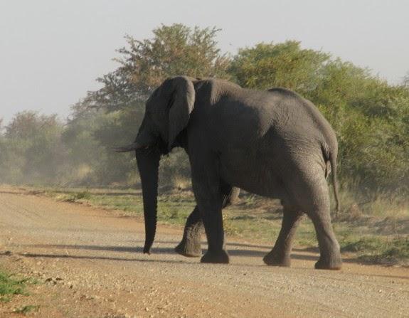 Namibia - elephant