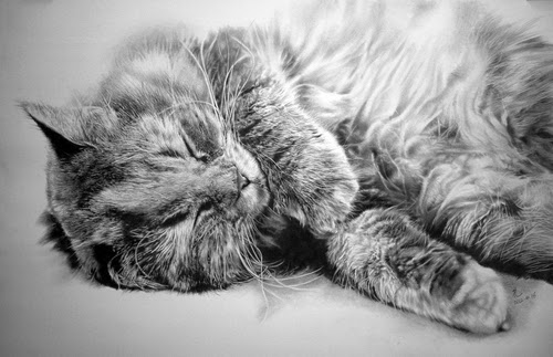 16-Hyper-realistic-Cats-Pencil-Drawings-Hong-Kong-Artist-Paul-Lung-aka-paullung-www-designstack-co