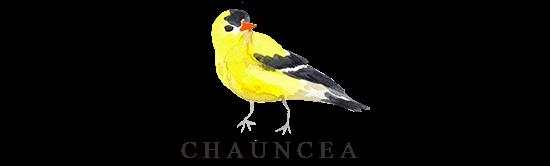 Chauncea