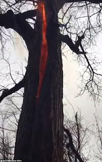 Το δέντρο του διαβόλου: Γιατί καίγεται μόνο το εσωτερικό του;