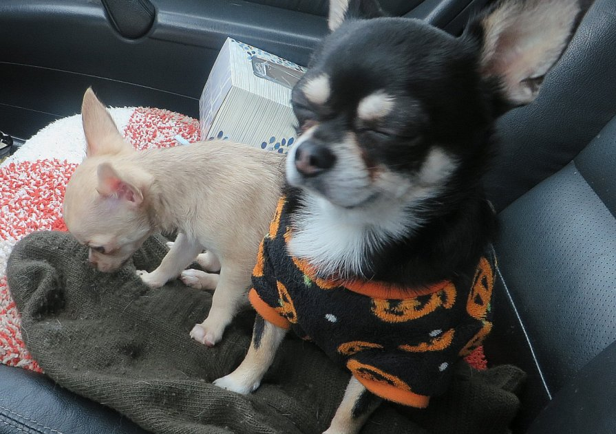 elso vasarlas 2 kutyaval:)