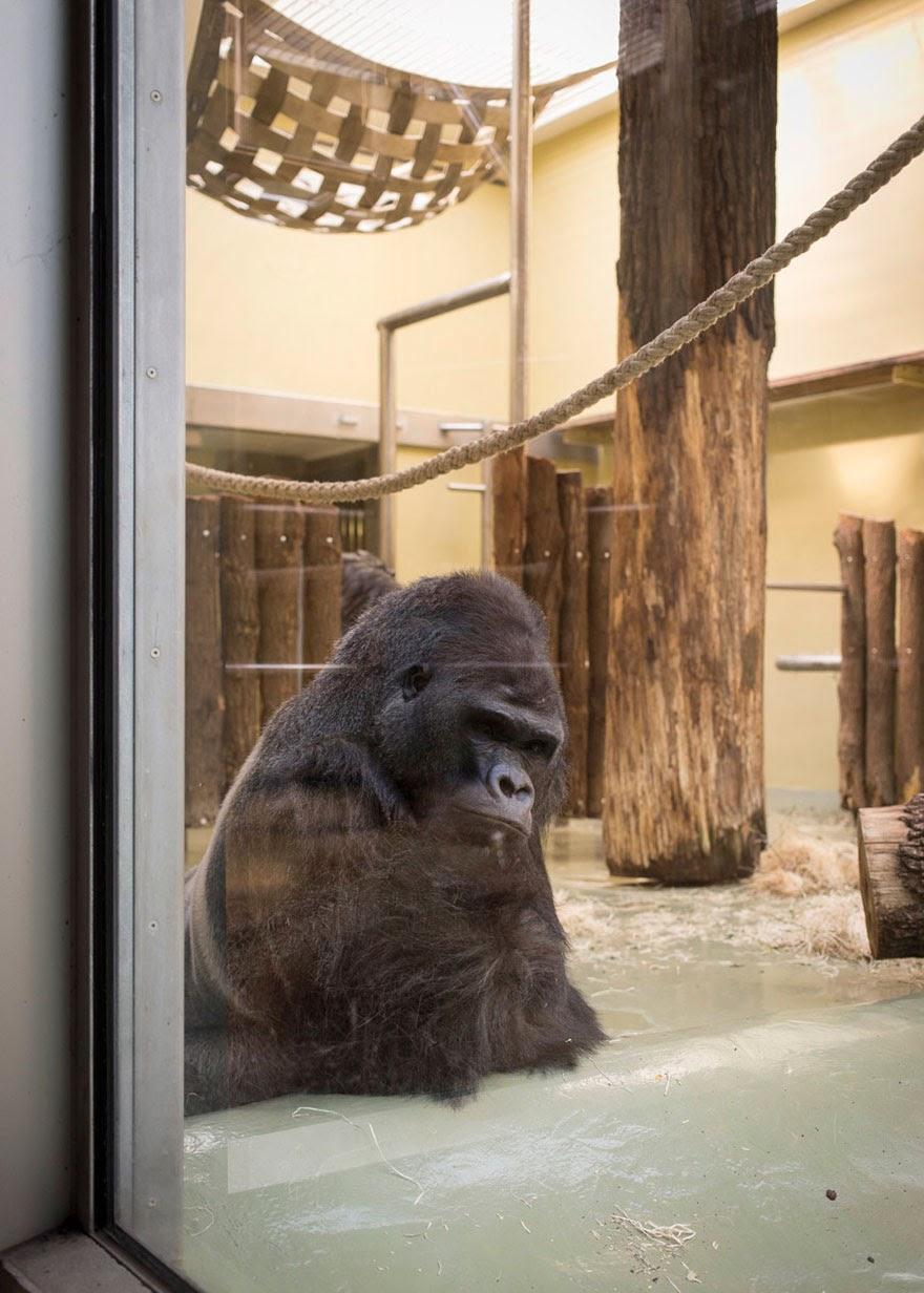 fotos deprimentes de animales