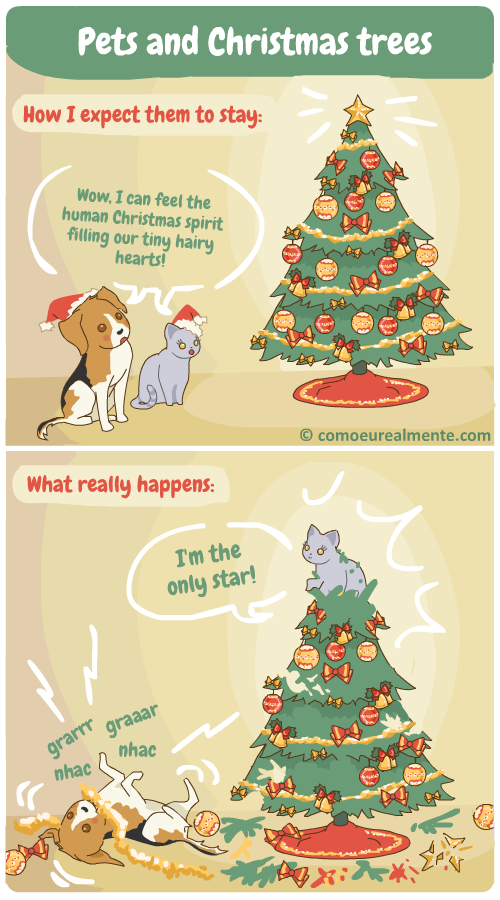 what really happens when my pets get together with the christmas tree, everything gets destroyed