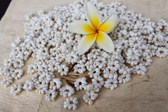 https://www.etsy.com/listing/169887448/mongo-shell-rosettes-white-mung-shell