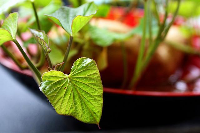 Folhas em forma de coração direto da natureza