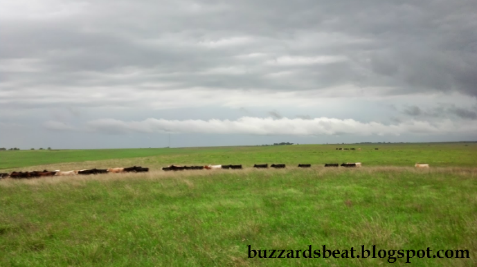 Cattle race across the plains before a summer storm in Kansas