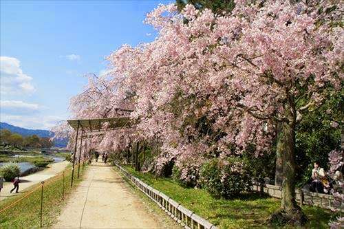 京都市左京区|半木の道
