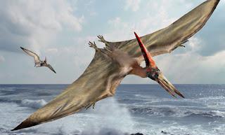 Pteranodon - Binatang Purbakala