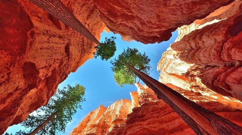 Un cañón donde crecen gigantescos pinos