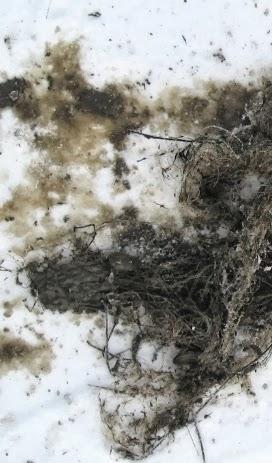 Браконьерская сеть на льду