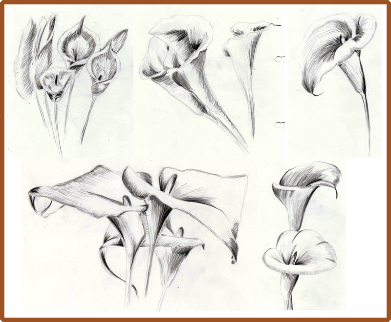 Weekly  Doodles and tuts How to draw a Calla Lily Method 3
