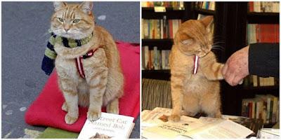Kisah Musisi Jalanan Yang Bersahabat Dengan Kucing
