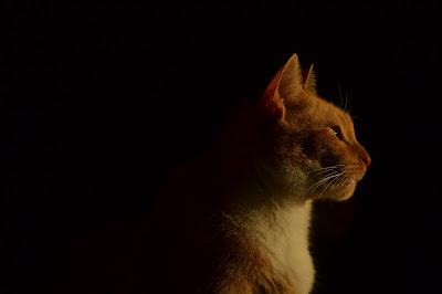Perfil, by Rafaella Stallone / PhotoConversa
