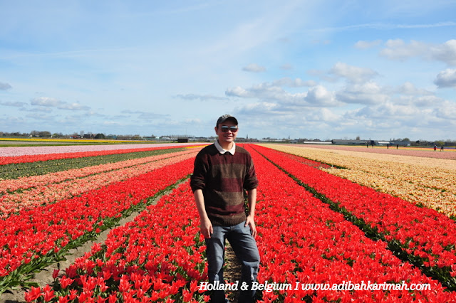 holiday to holland and belgium with premium beautiful at dr hasbi tulips farm