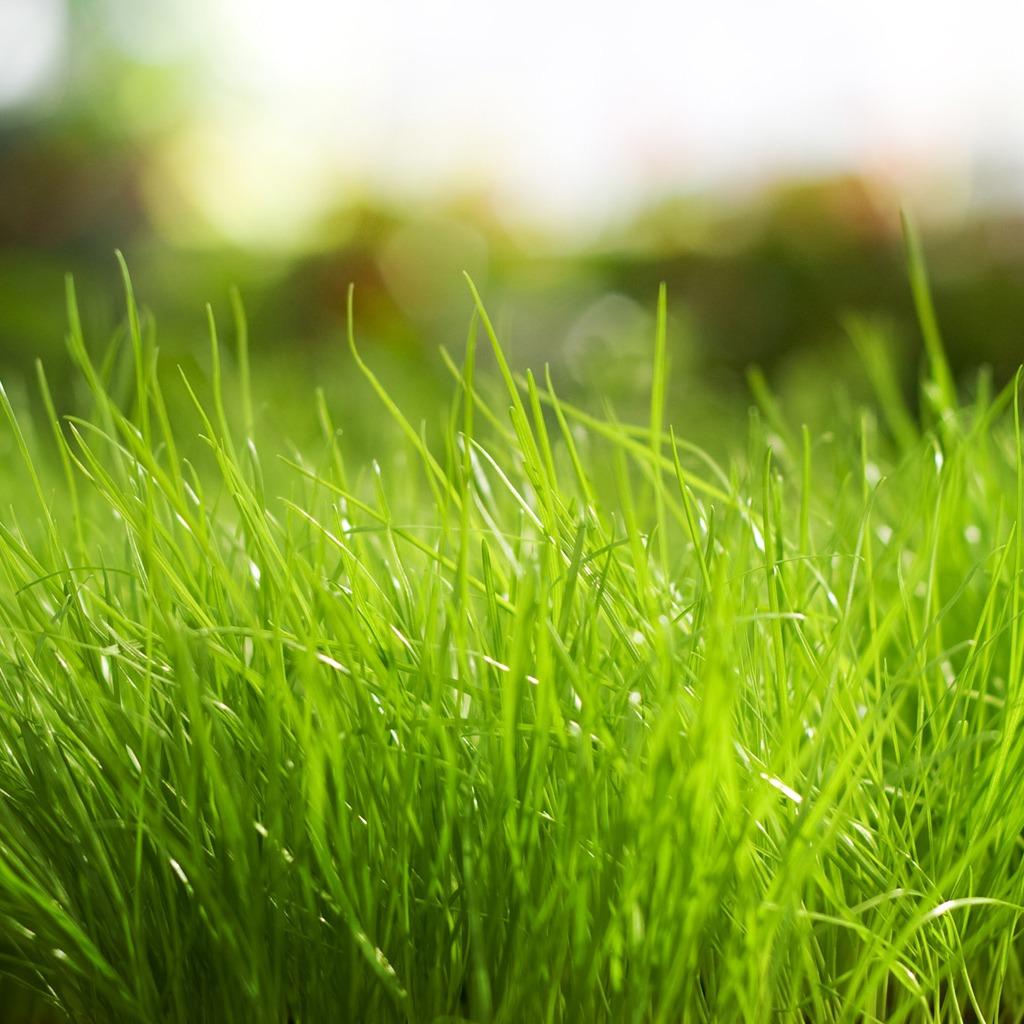 http://3.bp.blogspot.com/-CK3HsVSHH5k/UA8sDYbUYhI/AAAAAAAAAVI/pFQghcmn7Tk/s1600/hinh-nen-ipad-wallpaper-green-grass.jpg