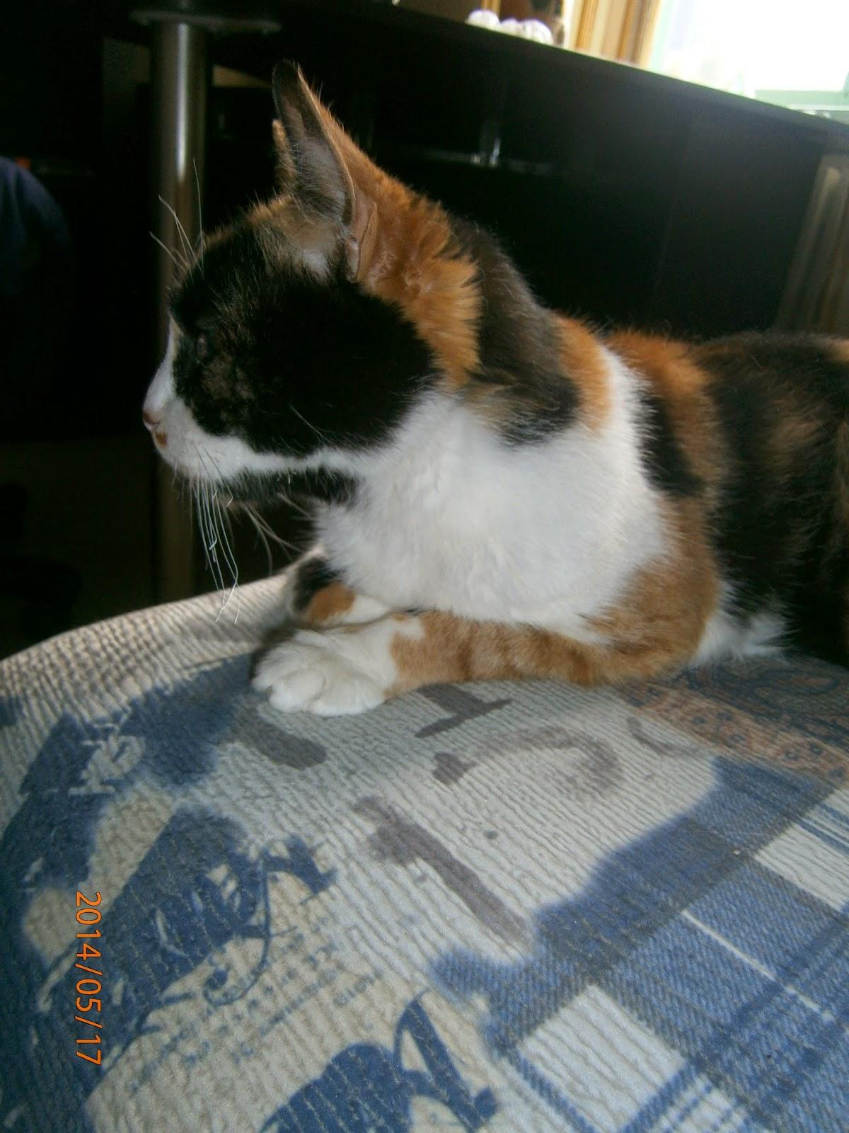 Кошка лежащая на живане