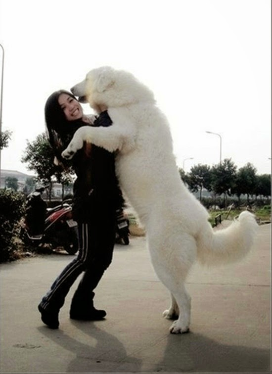 See more I wouldn't mind my dogs being this big. I mean bigger is better right?? http://cutepuppyanddog.blogspot.com/