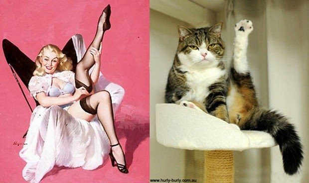 Cats That Pose Like Pin-Up Girls1