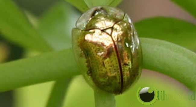 http://www.lihat.co.id/2013/06/7-binatang-dengan-warna-emas-yg-paling.html