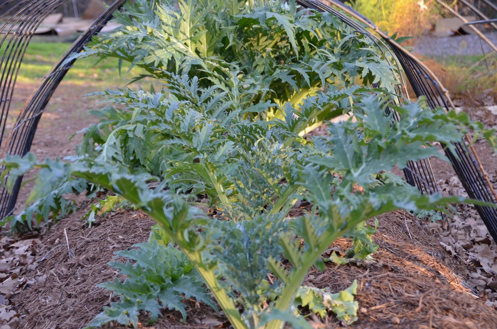garden ally fall vegetable garden paying off