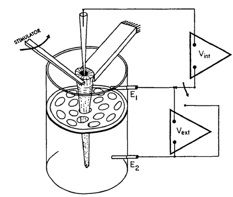 The cellular scale plant neurons sensation and action in the venus benolken and jacobson 1970 figure 1 a trigger hair set up for electrophysiological recordings ccuart Choice Image