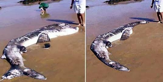 plesiosaurus mati di pesisir pantai