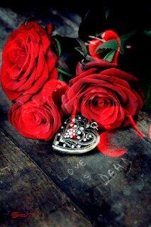 frases y rosas