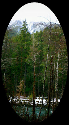 elwha forest