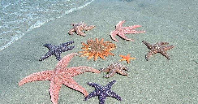 Why Voters Are Angry Part I >> The CCE-Drive: Rob Ford is A Starfish - But Aren't We All?