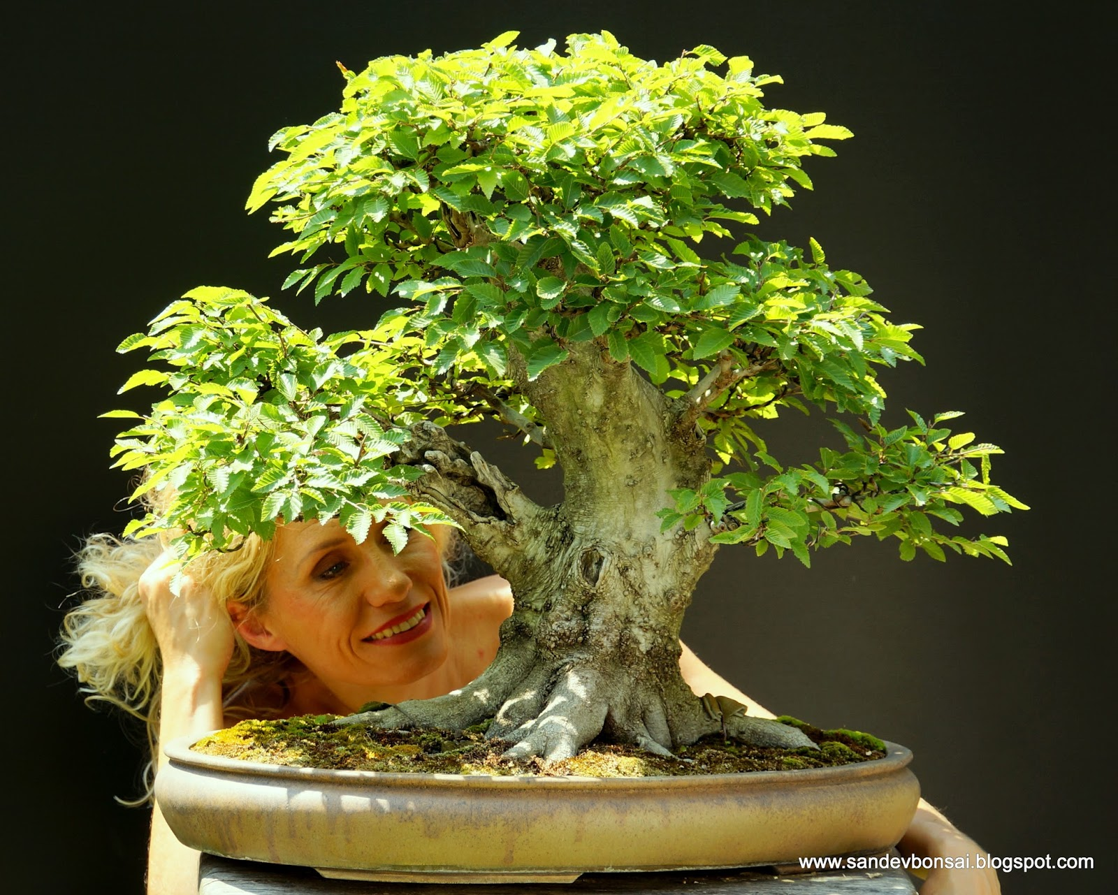 SandevBonsai Killer Nebari Summer Update 2013