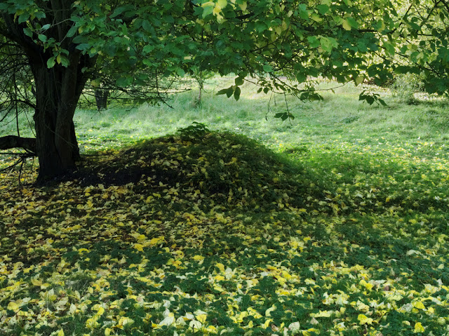 Yellow leaves on a grassy mound
