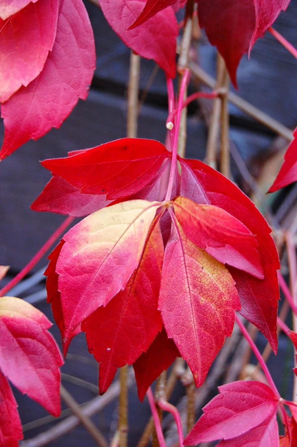 Landmädel: Der Herbst ist da
