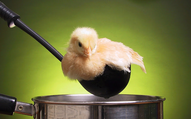 Best Jungle Life ladle, pot, chick, food