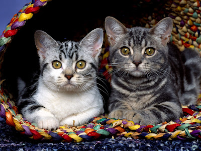 two sister kittens