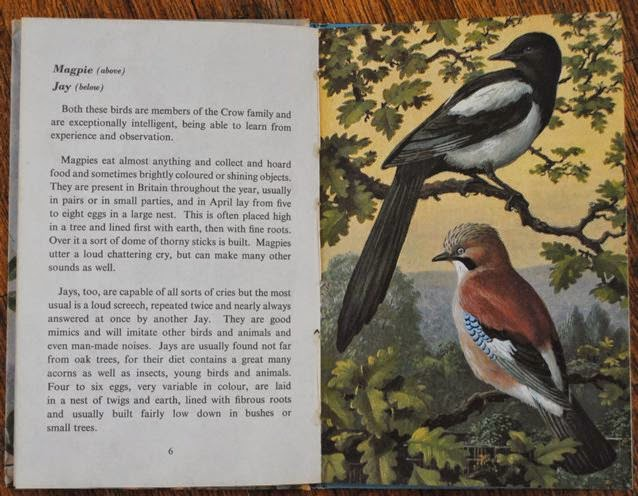 Ladybird book of garden birds - magpie