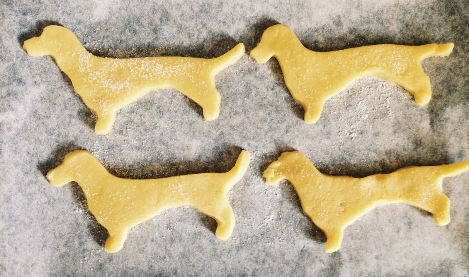 sausage dog dachshund biscuits