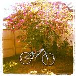 Mi bici celeste