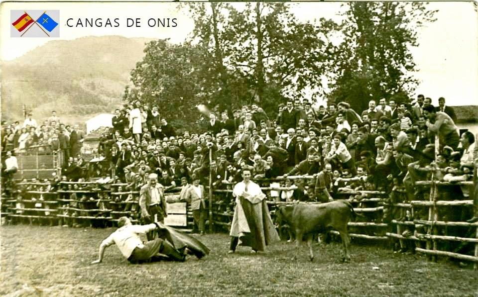 CANGAS DE ONIS TOROS