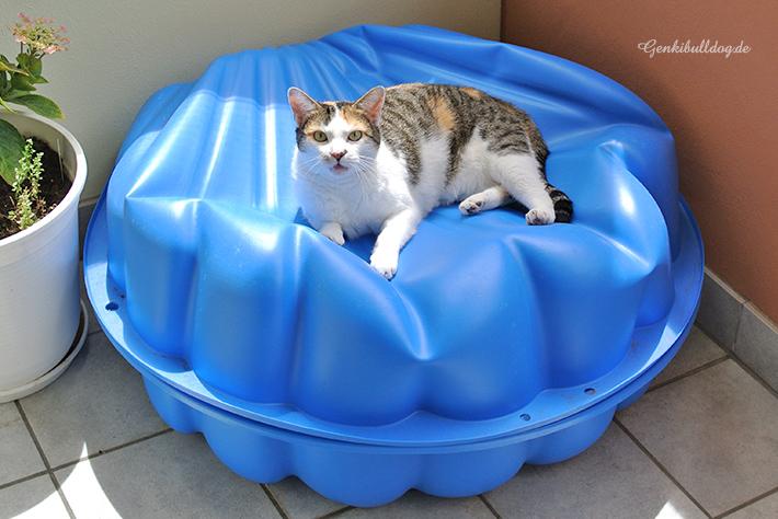 Katzenplanschbecken