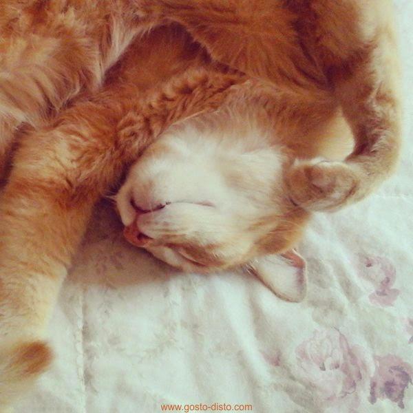 Dormir como um gato