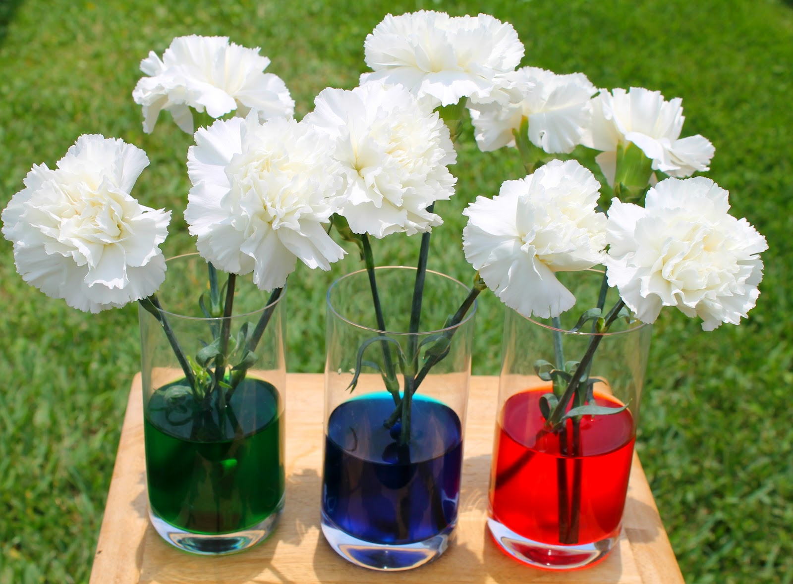 colored carnation experiment - Carnation Flower Colors